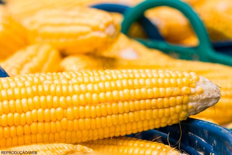 Convênio 100 reduz icms sobre produtos agro e bancada ruralista defende prorrogação