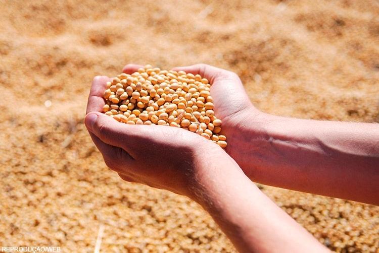 Fim da Lei Kandir e Convênio 100 podem tirar R$ 80 bi do agro